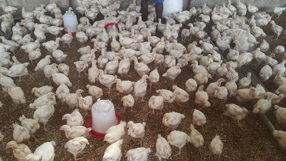 Gaye Abari Farms